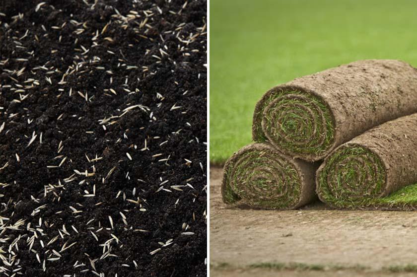 sod-grass seed